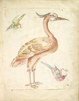 Standing Heron And Two Small Birds, One Perched And One In Flight; Verso: Blank