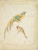 Two Perched Birds; Verso: Blank