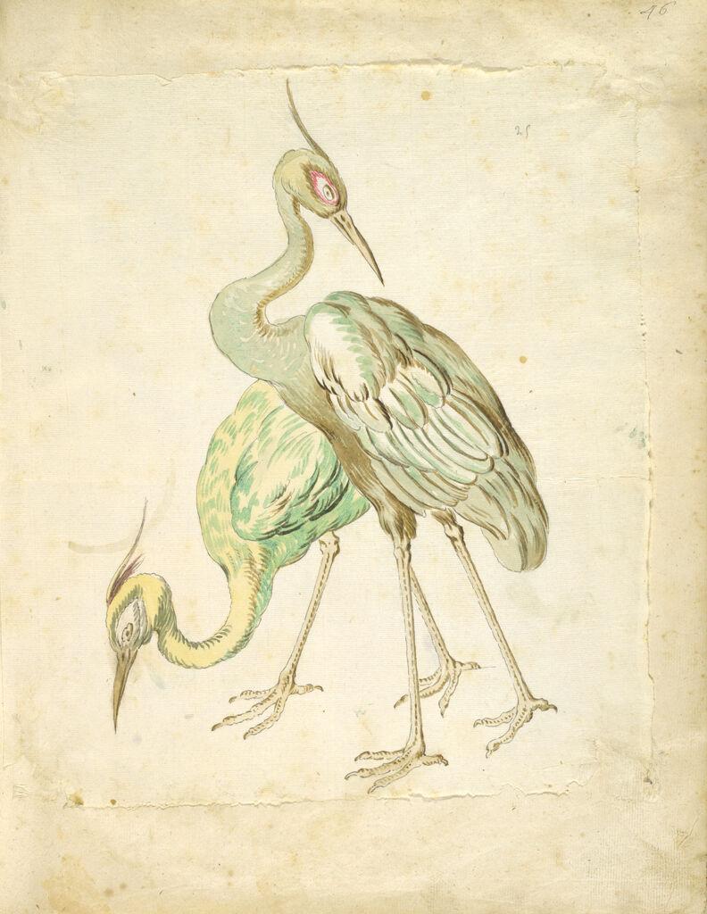 Two Herons; Verso: Blank