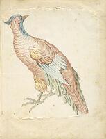 Standing Pheasant; Verso: Blank