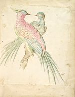 Two Pheasants Perched on a Branch; verso: blank