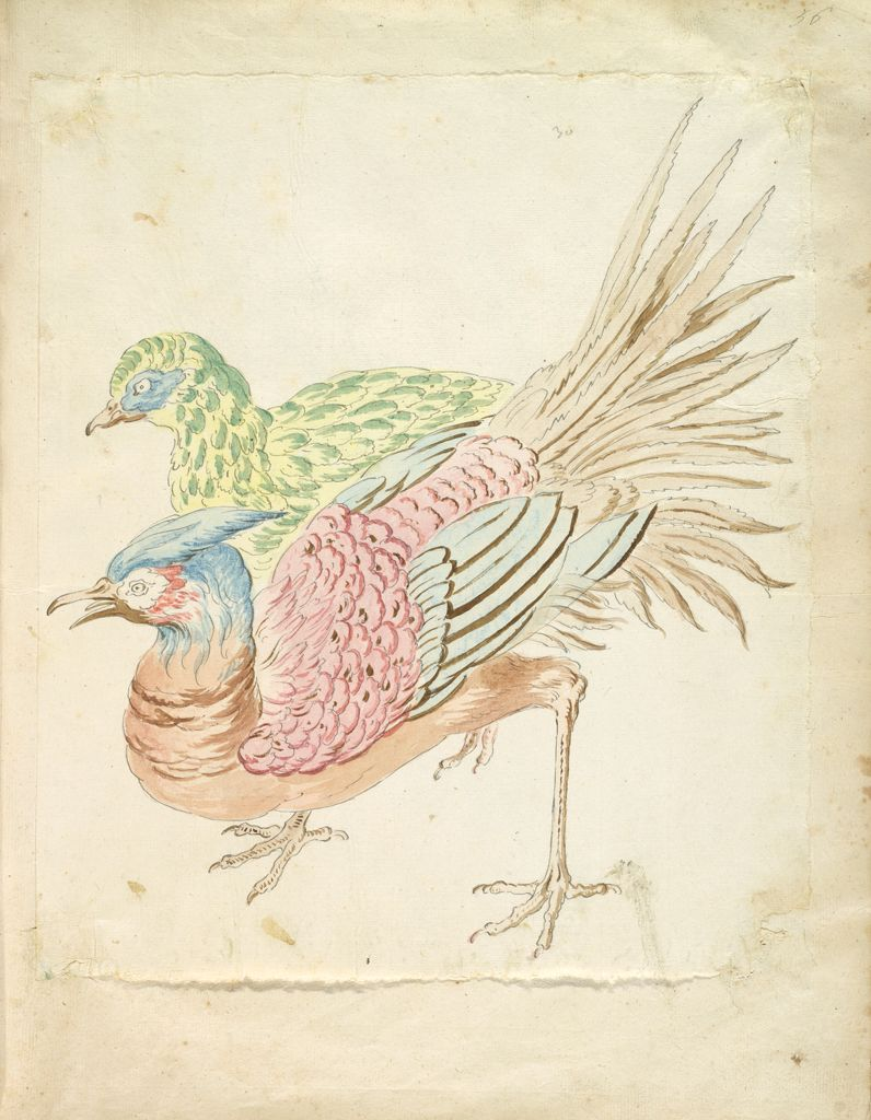 Two Hunched Pheasants; Verso: Blank