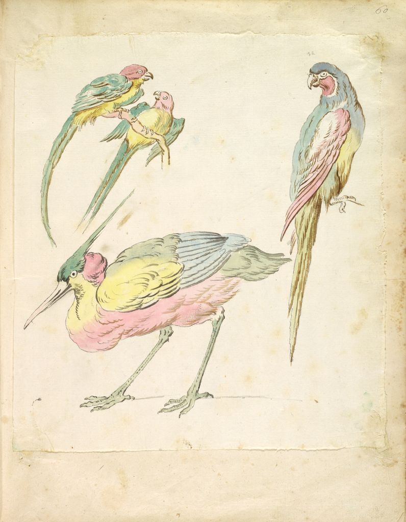 Hunched Heron And Three Perched Parrots; Verso: Blank