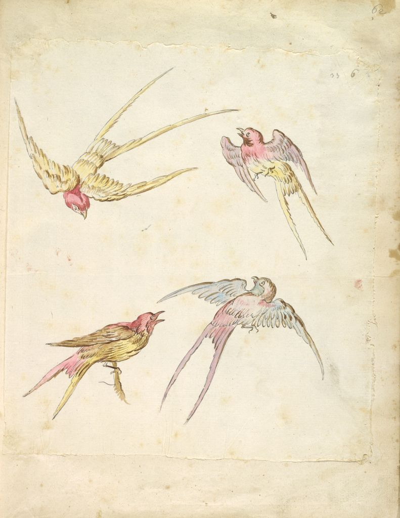 Four Swallows, One Perched And Three In Flight; Verso: Blank