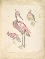 Standing Heron And Two Perched Birds; Verso: Blank