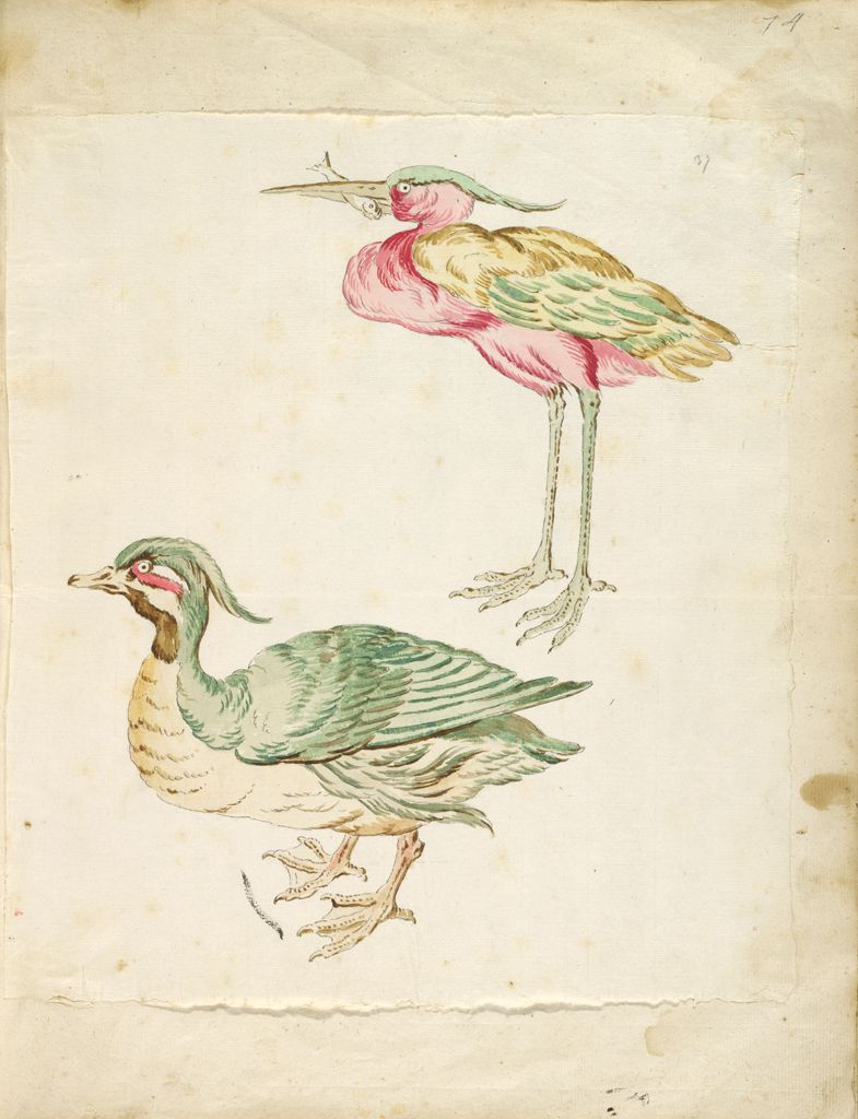 Duck And Heron With A Fish; Verso: Blank