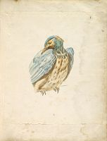 Perched Bird Looking Over Its Shoulder; Verso: Blank
