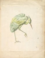 Standing Heron With Right Leg Raised; Verso: Blank
