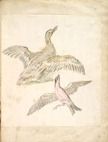 Duck And Bird, Both With Wings Extended ; Verso: Blank