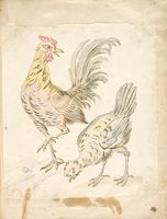 Rooster And Hen; Verso: Blank