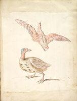 Standing Duck And Bird In Flight; Verso: Blank