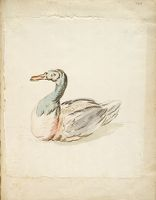 Seated Duck; Verso: Blank