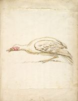 Hunching Duck In Profile To The Left; Verso: Blank