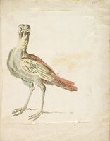 Quizzical Bird; Verso: Blank