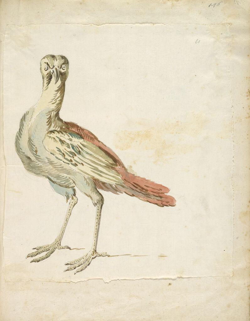 Quizzical Bird; Verso: Blank