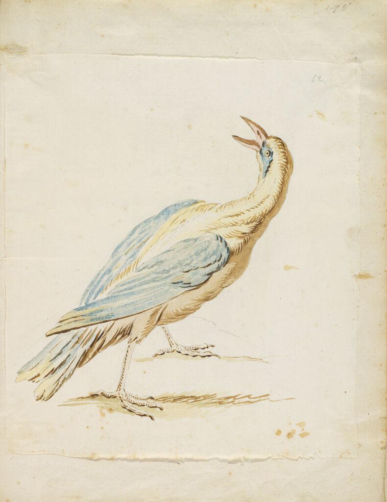 Standing Bird Looking Upward And Behind; Verso: Blank