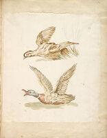 Two Birds Taking Flight; Verso: Blank