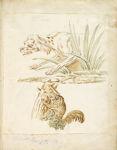 Dog and Squirrel; verso: Crane