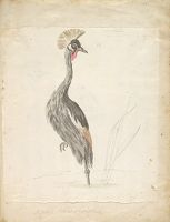 Crane Looking To The Left; Verso: Crane Stading On One Leg Looking To The Right