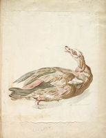 Egyptian Duck; Verso: Partridge
