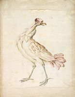 Standing Bird Looking Right; Verso: Two Wading Ducks Flapping Their Wings And Looking Upward