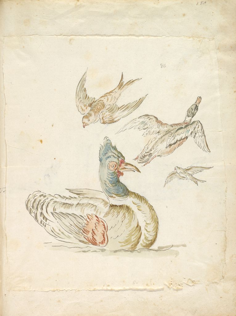 Four Birds; Verso: Two Wild Ducks
