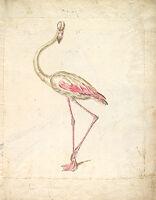 Flamingo; Verso: Two Peacocks