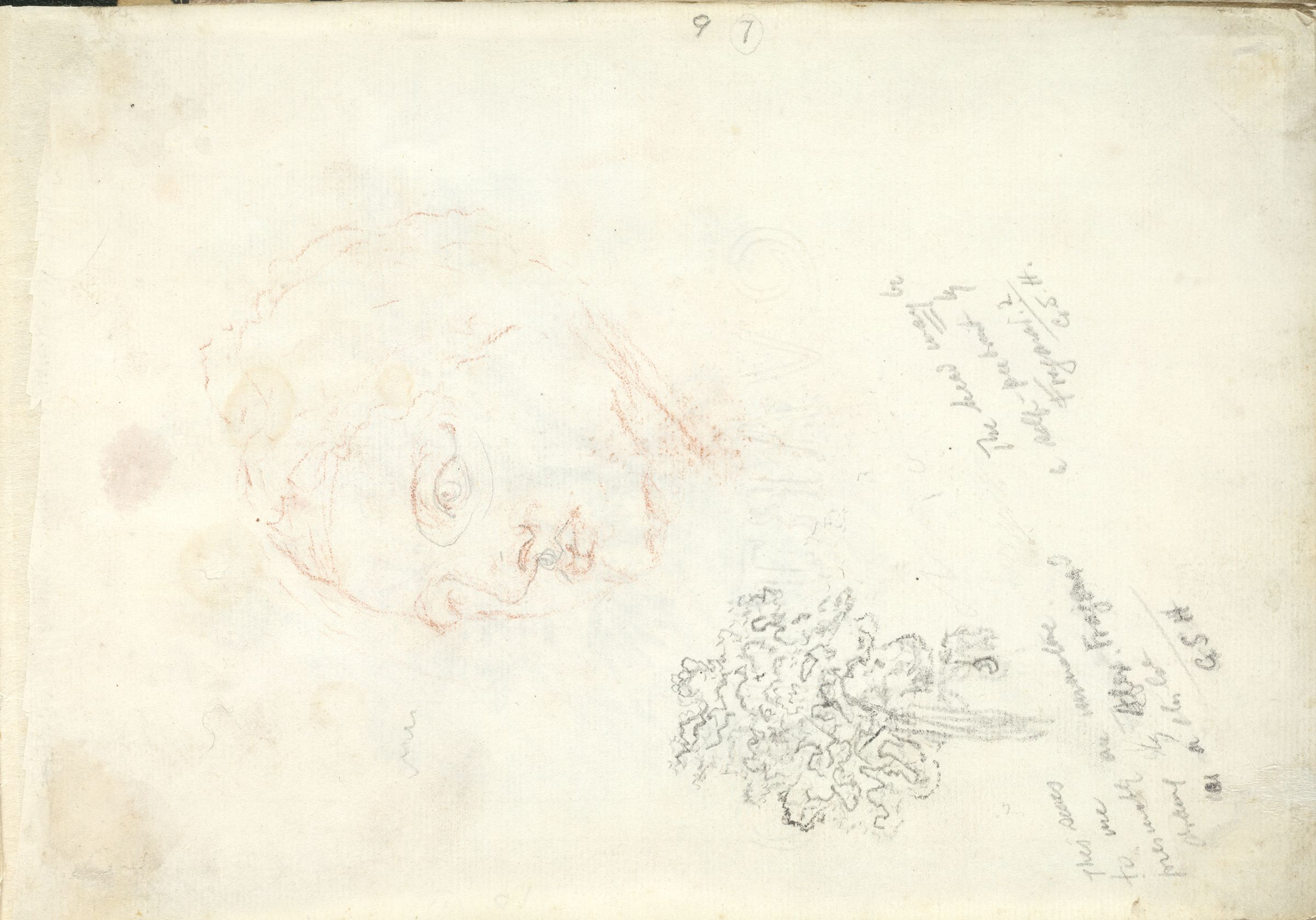 Head Of A Man And A Tree; Verso: Blank Page
