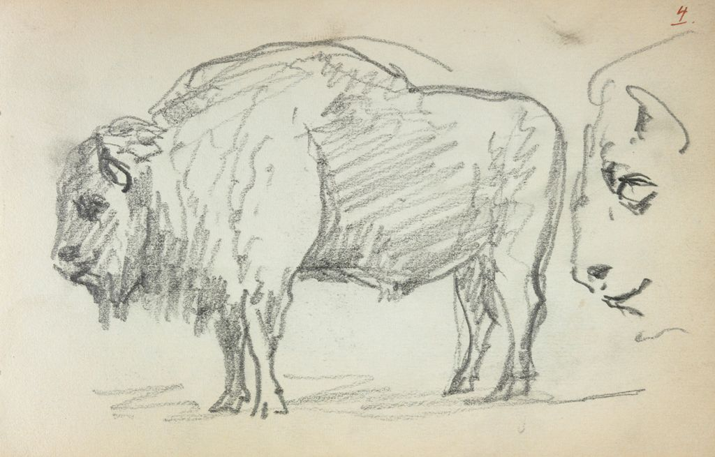 Studies Of A Buffalo; Verso: Sketches Of Gondoliers