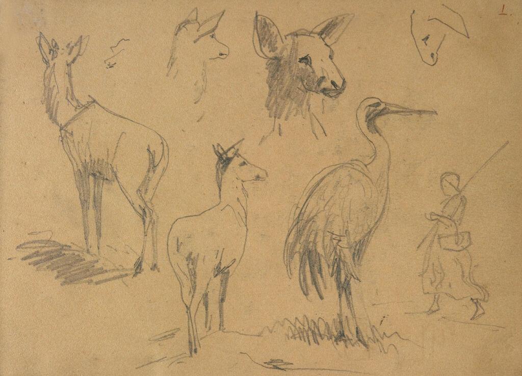 Bird; Animals; Figure; Verso: Studies Of A Goat