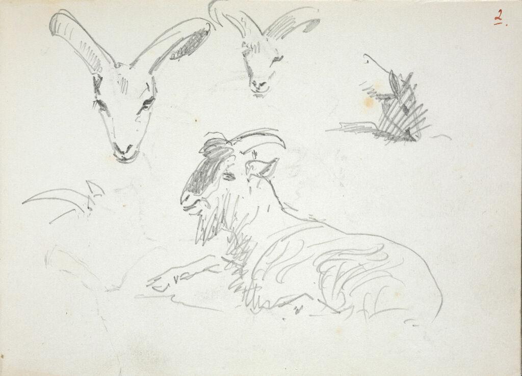 Studies Of Goats; Verso: Studies Of Deer
