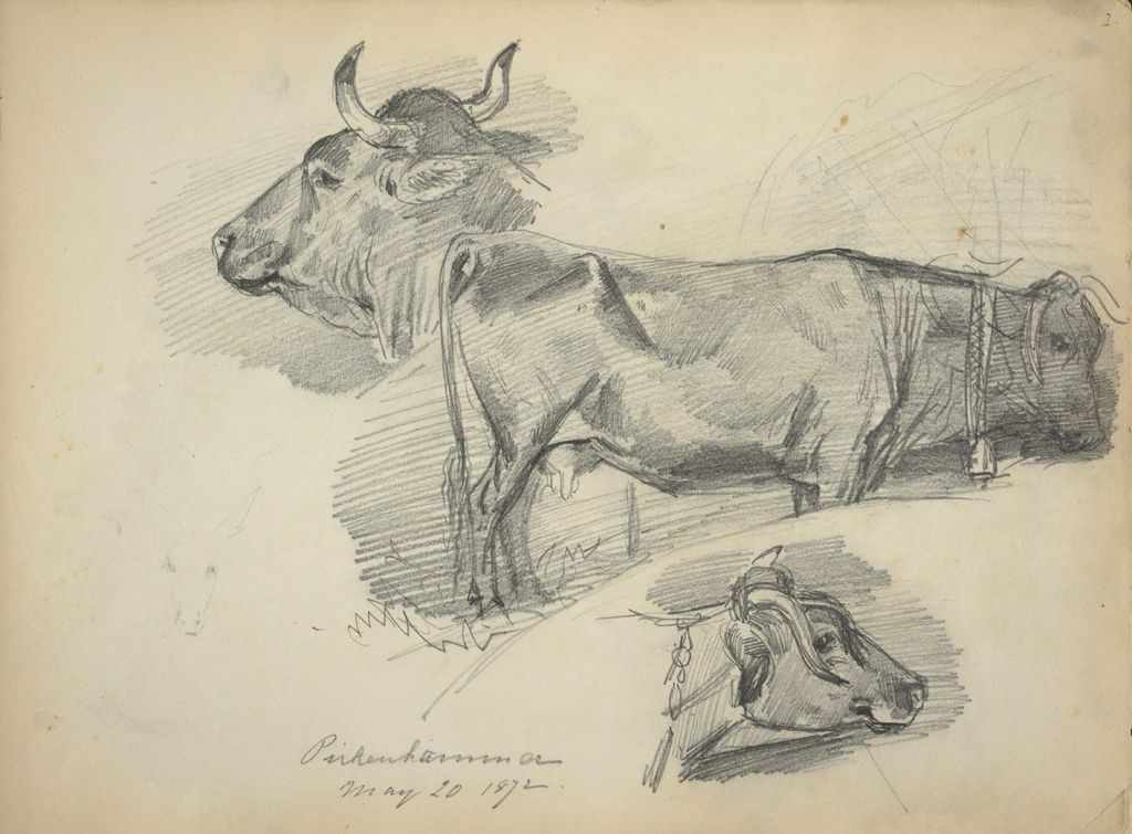 Three Studies Of Cows