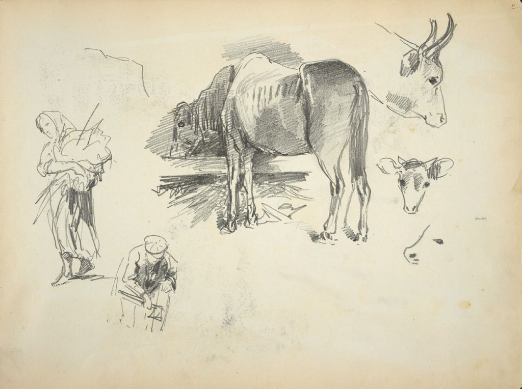 Horse And Cow Sketches; Figure Sketches