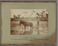 Work 1 of 10 Title: Ploughing a rice field Creator: Tamamura, Kozaburo Date: ca. 1890