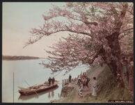 Work 5 of 52 Title: Mukojima, Tokio Creator: Farsari, Adolfo Date: 1886?