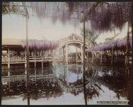 Work 7 of 52 Title: Kameido, Tokyo (wisteria flower) Date: 1897?