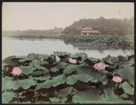 Work 8 of 52 Title: Lotus pond, Shinobadzu, Uyeno Park, Toki... Date: ca. 1890