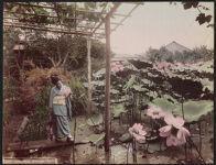 Work 9 of 52 Title: Lotus pond, Kameido, Tokio Creator: Kajima, Seibei Date: ca. 1890