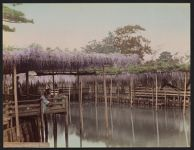 Work 10 of 52 Title: Wisteria tea house, Kameido, Tokyo Date: 1897?