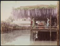 Work 11 of 52 Title: Wisteria tea house, Kameido, Tokyo Date: ca. 1890