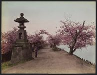 Work 36 of 52 Title: Cherry blossoms along the Sumida River, ... Date: ca. 1890