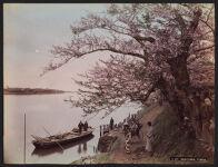 Work 37 of 52 Title: Mukojima, Tokio Creator: Farsari, Adolfo Date: 1886?