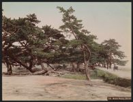Work 51 of 52 Title: Maiko Beach, Harima Date: ca. 1890
