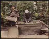 Work 20 of 53 Title: Spreading tea leaves in trough to wither Date: ca. 1890