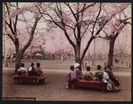 Work 42 of 53 Title: Uyeno park, Tokyo, cherry [trees] Date: ca. 1890