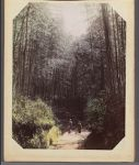 Work 7 of 29 Title: Two Japanese women walking on path throu... Date: ca. 1890