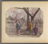 Work 10 of 50 Title: Japanese mothers with children and cherr... Date: ca. 1890