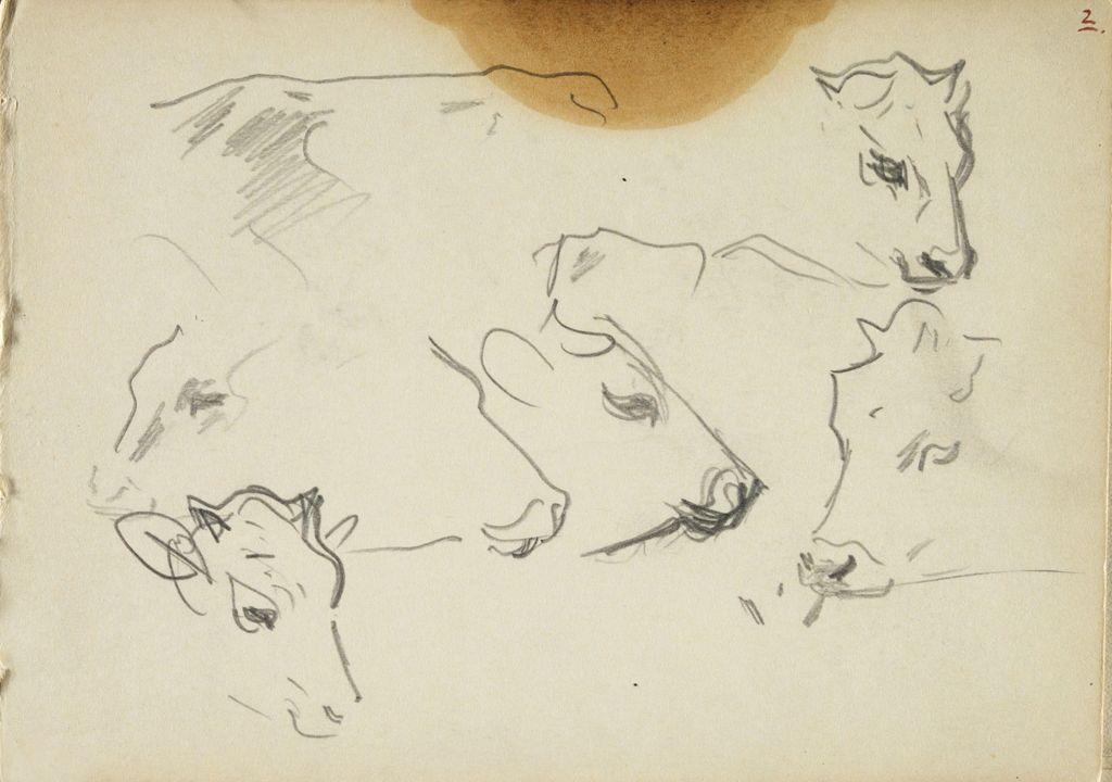 Sketches Of Cows' Heads; Verso: Sketch Of Cow