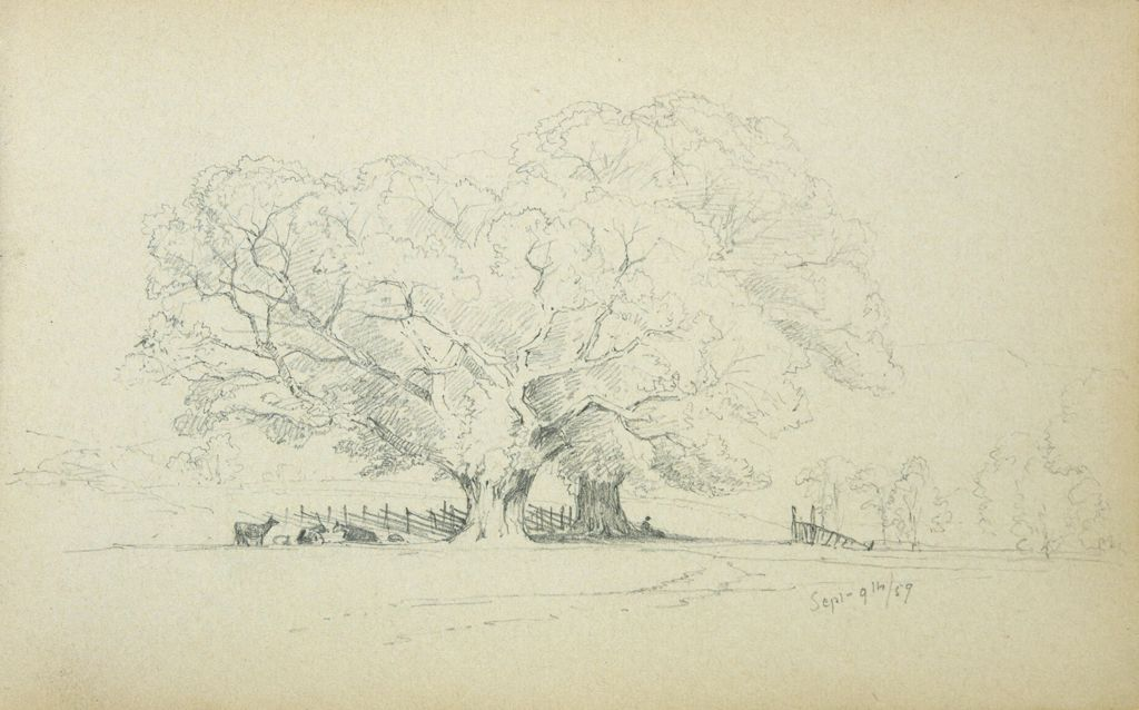 Cattle Under The Trees; Verso: Blank Page