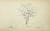 Tree in a Landscape; verso: blank page